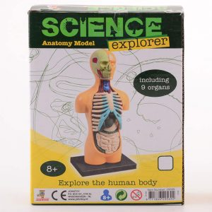 Explorer organen model