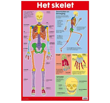 Poster Het skelet